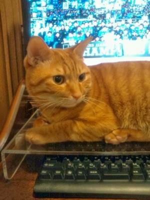 キーボードを猫から守る1