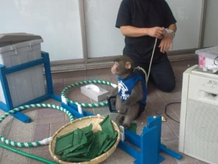 お猿さん2