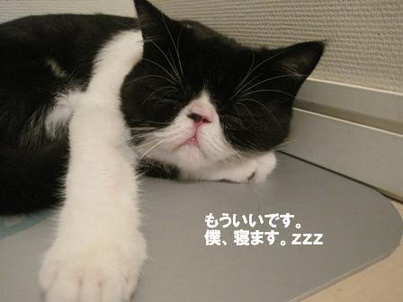 寝ちゃってる カブキ