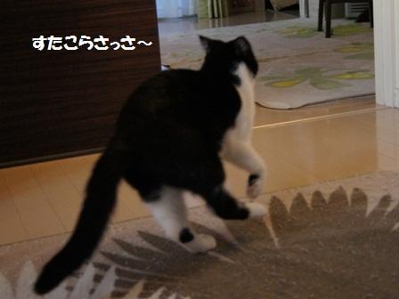 逃げるカブキ