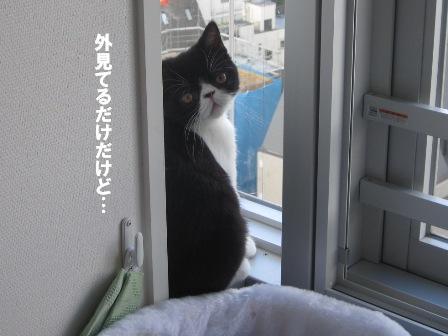 窓枠カブキ