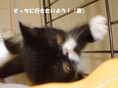 泣き虫ジャパン