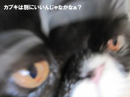 どアップジャパン