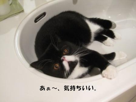 洗面台ジャパン