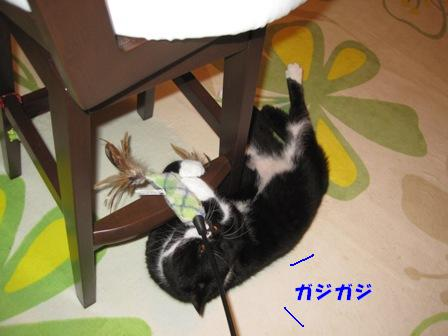 ガジガジ ジャパン