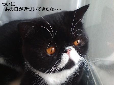 かみ締めジャパン
