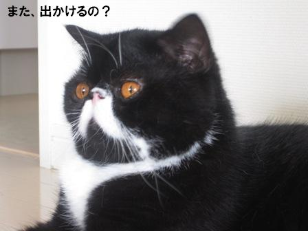 聞いているジャパン