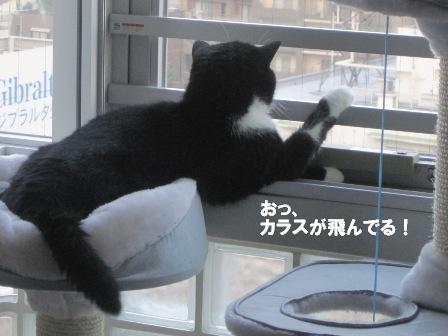 偵察ジャパン