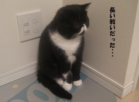 疲れるジャパン