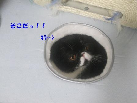 発見ジャパン