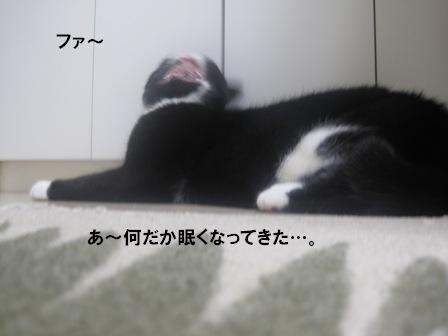 あくびジャパン