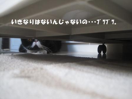 ぶつぶーつ ジャパン