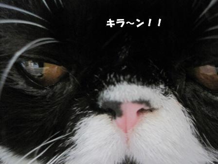 キラーン ジャパン