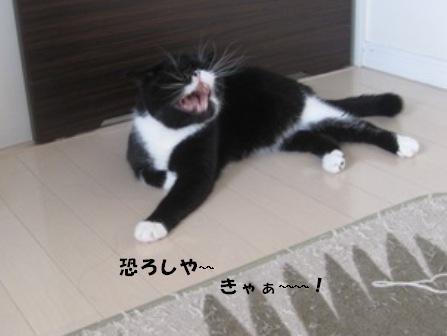 キャー ジャパン