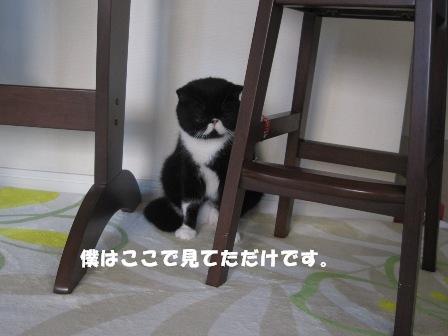 シランフりジャパン