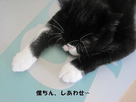 しあわせ~ ジャパン