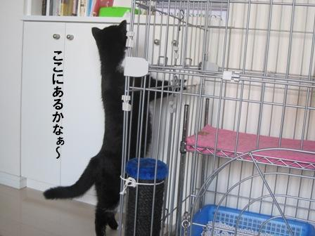 メシさがしジャパン