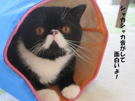 シャカシャカ ジャパン
