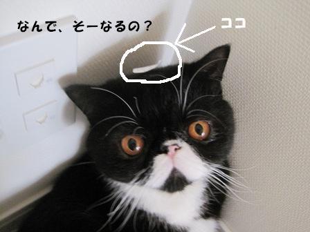 値札ジャパン