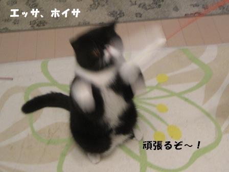 エッサホイサ ジャパン