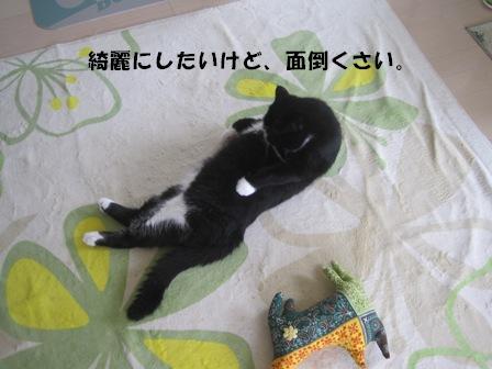 てぬき ジャパン