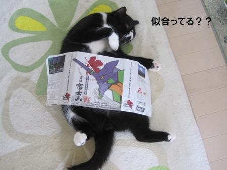 包装紙ジャパン