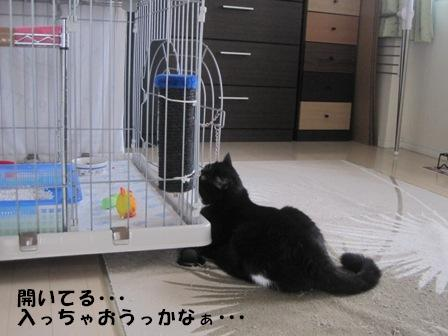 入っちゃおうっかな ジャパン