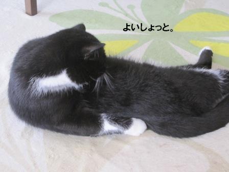 寝転びジャパン