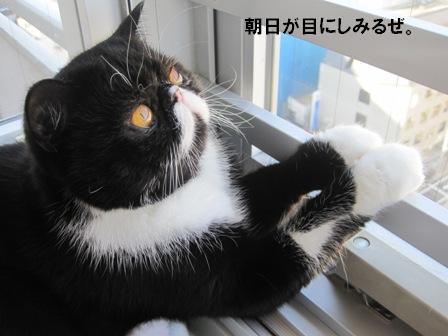 朝日ジャパン