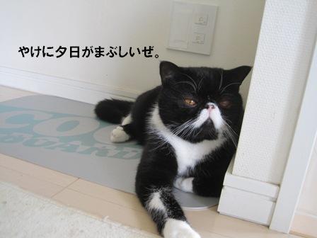 夕日ジャパン