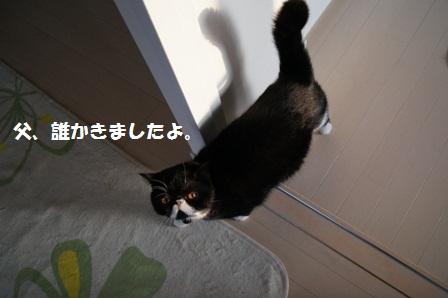 お知らせジャパン