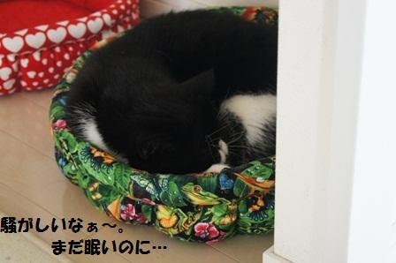 まだ眠いジャパン