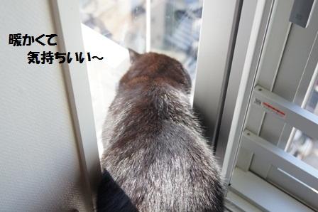 暖かいジャパン