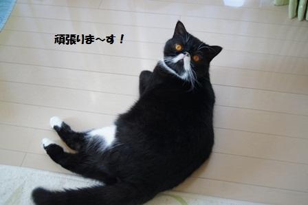 がんばる?ジャパン