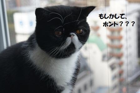 信じる?ジャパン