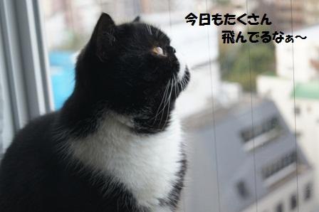 空見るジャパン