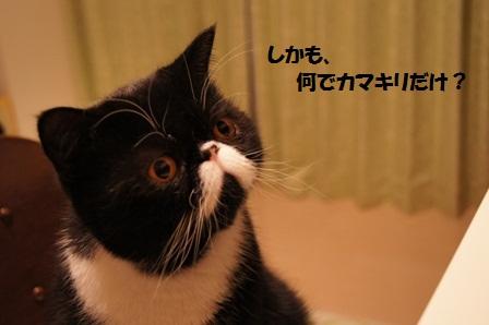何で?ジャパン