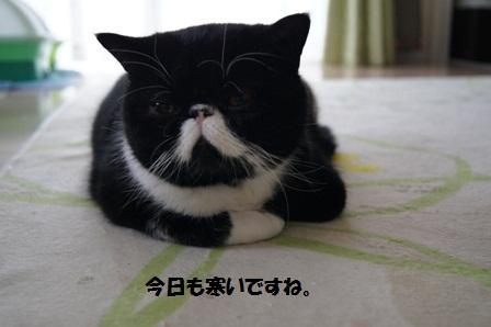 今日も寒いジャパン