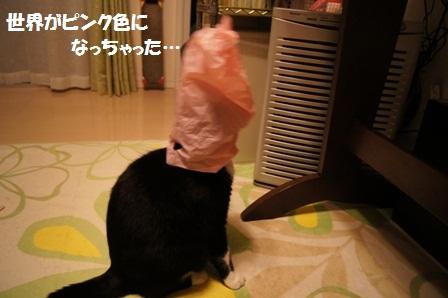 ピンクジャパン