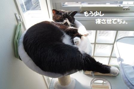 寝たふり?ジャパン