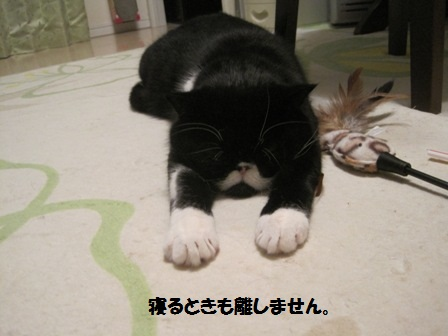 飛び寝ジャパン
