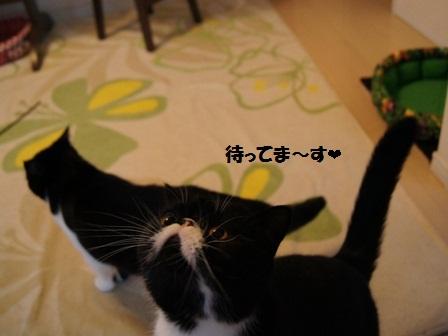 待ってますジャパン
