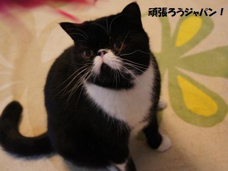 頑張ろうジャパン!