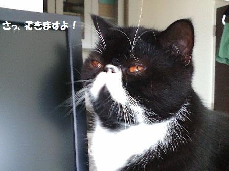 ブログ書くジャパン