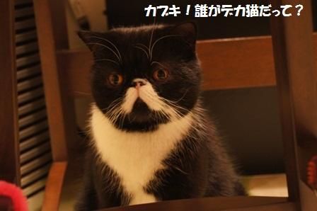 ごまかしジャパン