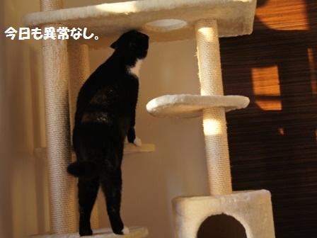 タワージャパン