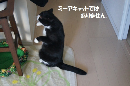 立ち上がるジャパン