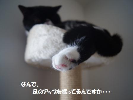 寝るジャパン