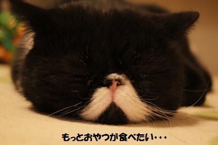 涙目ジャパン