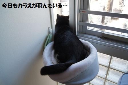 ジャコムジャパン